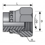 BSP GAS 60º swivel female plug